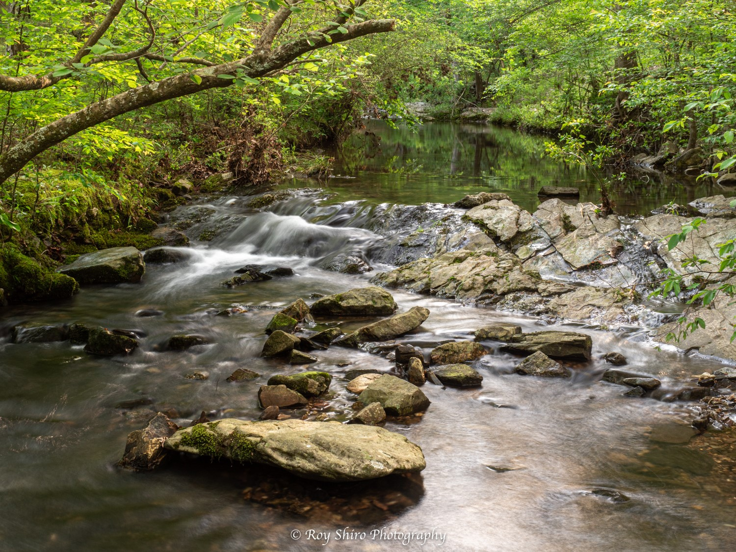Peaceful river running over rocks with green tree line above